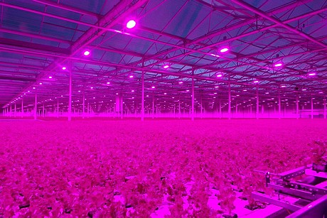 tuinbouw project led